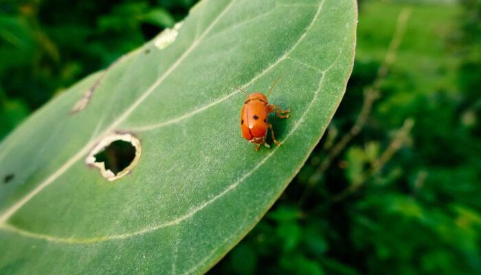 Concevoir des thèmes WordPress : utilisation de Firebug et de YSlow
