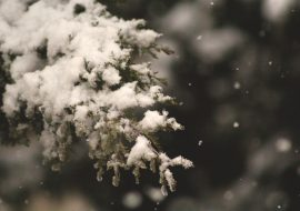 Désactiver les chutes de neige sur votre WordPress